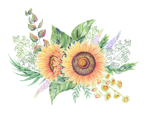 Sunflower png watercolor. Pin by pam hynes