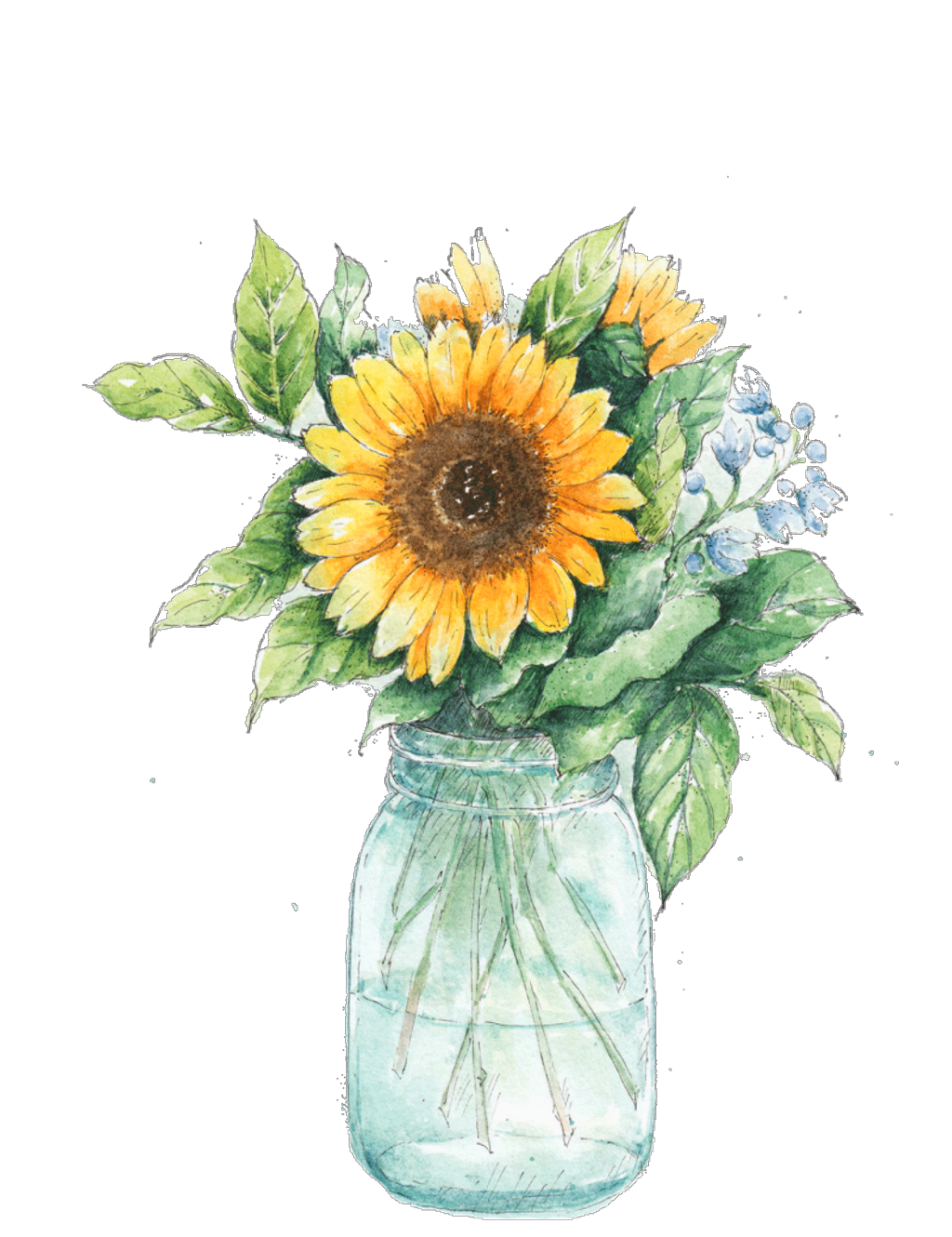 Watercolor sunflower png. Ftestickers masonjar