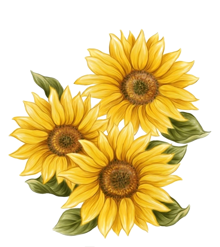 Watercolor sunflower png. F e b