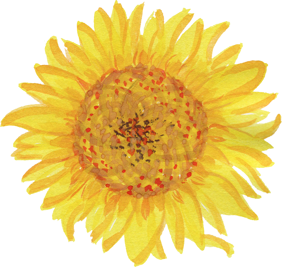 Watercolor sunflower png. Transparent onlygfx com