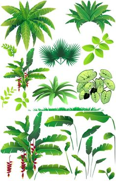 Waterfall clipart rainforest ecosystem. Shoe box bing images