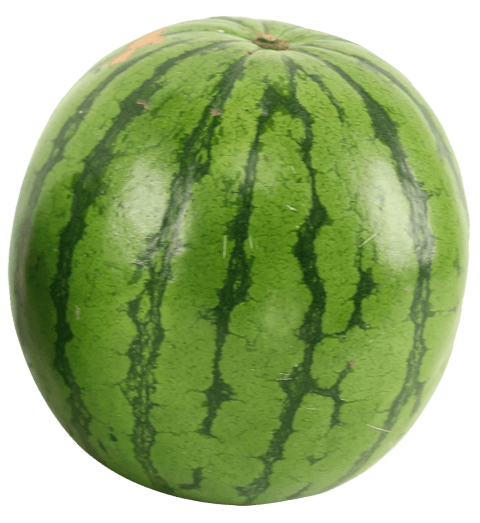 Watermelon png images. Free toppng transparent