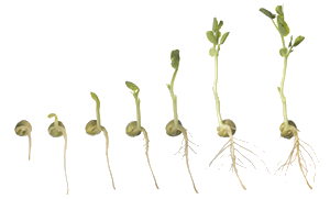 Watermelon seeds png. Guides and articles from