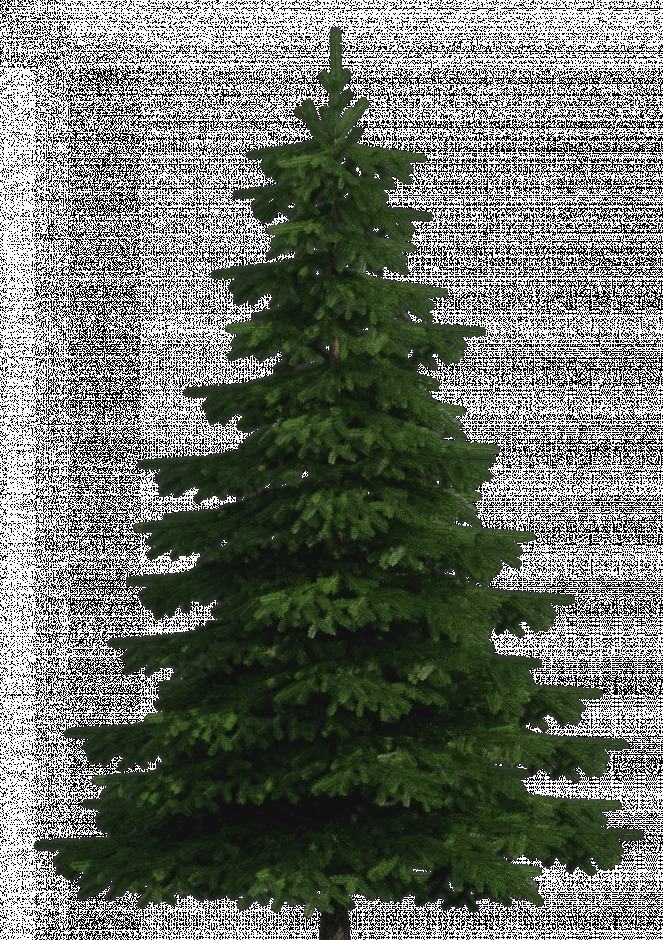 Web clipart realistic. Images of pine tree