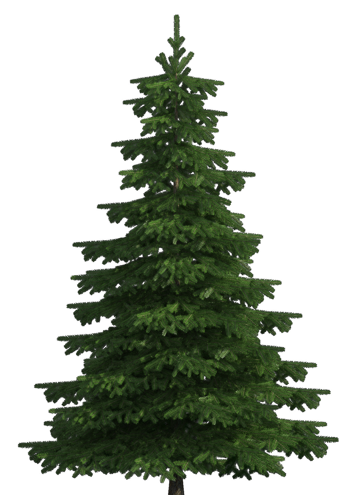 Web clipart realistic. Pine tree png clip