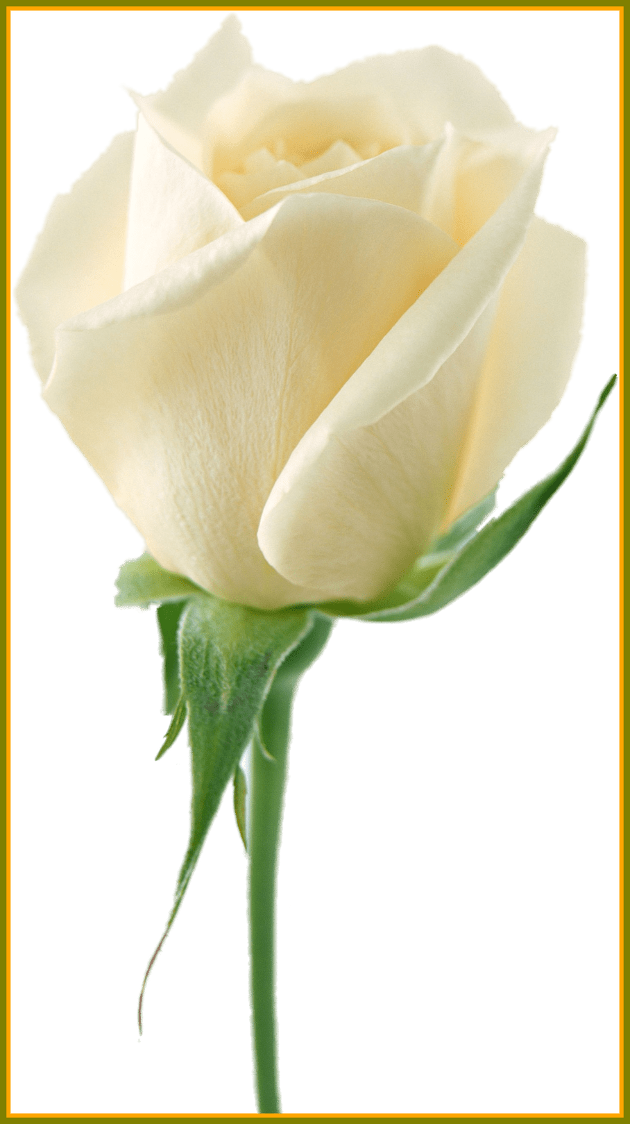 Wedding bouquet png. Amazing white roses my