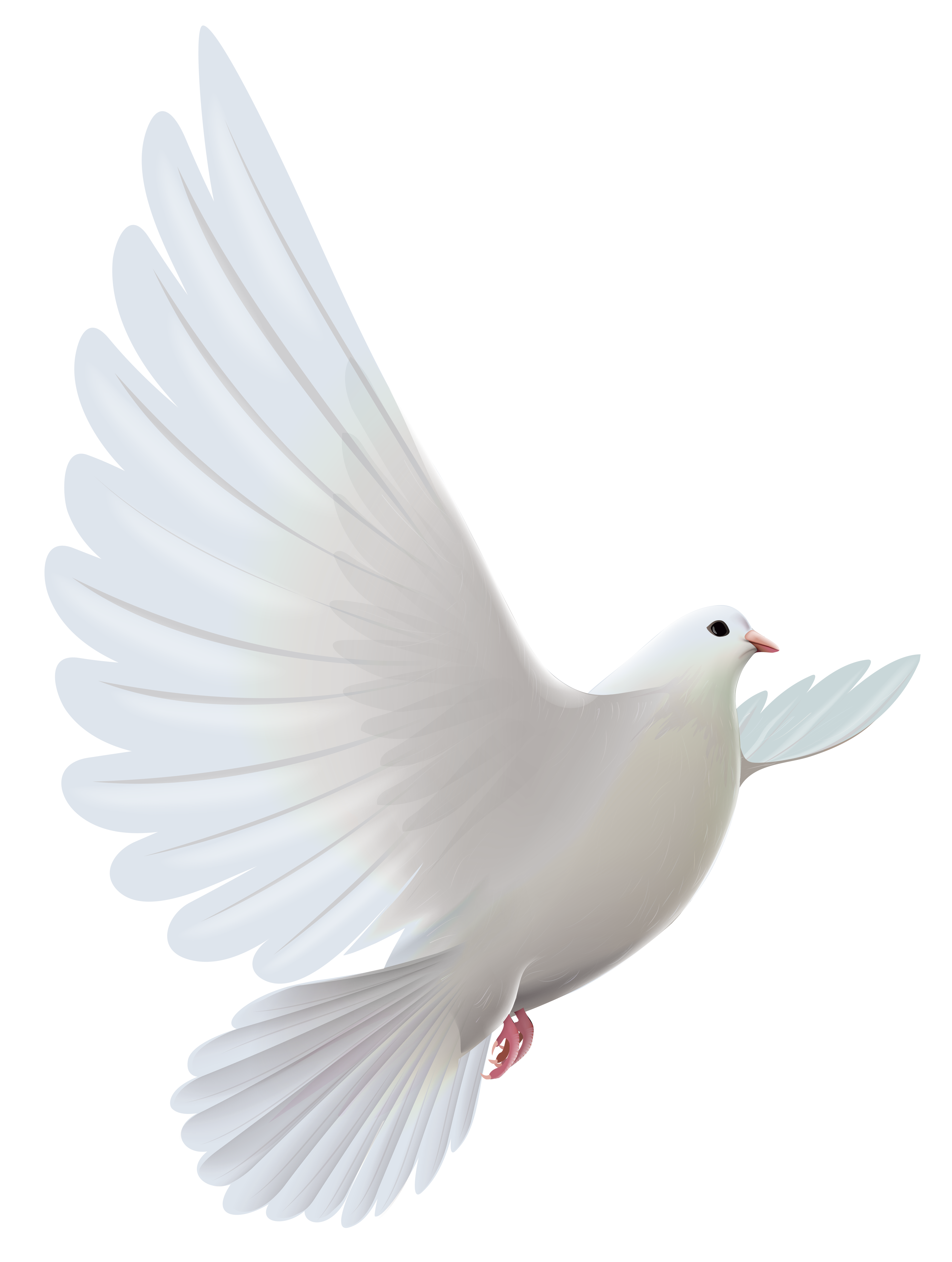 Vector doves funeral dove. White transparent png clipart