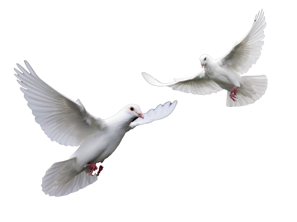 Wedding dove png. Doves free icons and