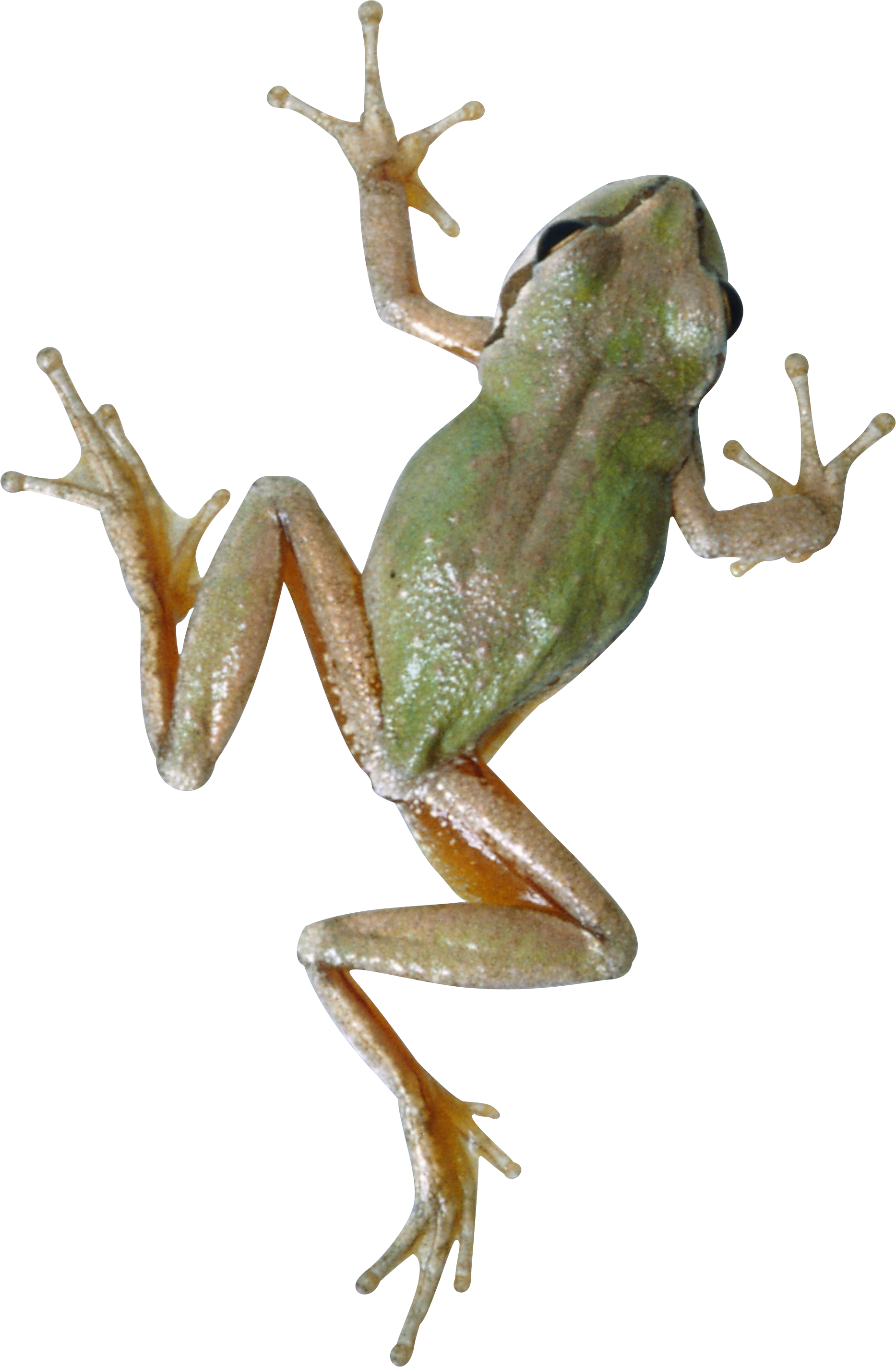 Wednesday frog png royalty free download