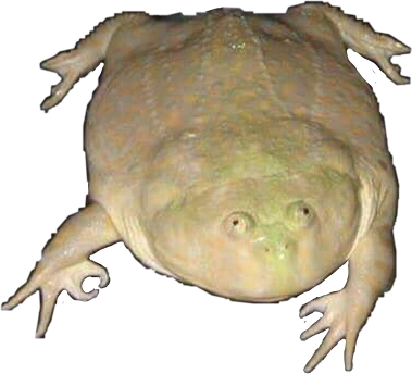 Meme memes its my. Wednesday frog png clip art free stock