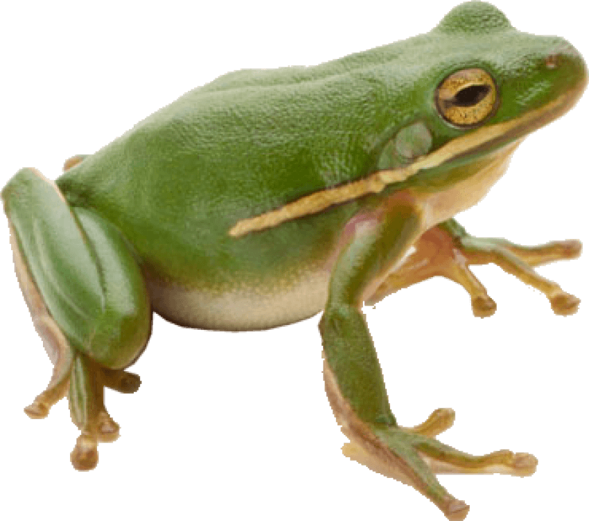 Wednesday frog png. Free images toppng transparent