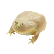 Wednesday frog png. Image