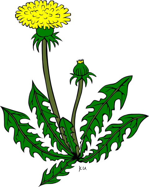 Weed clipart vector library stock