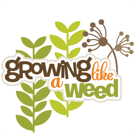 Weed svg. Growing like a scrapbook