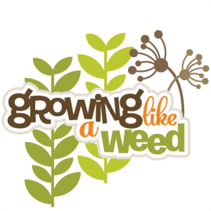 Weed svg clipart. Growing like a scrapbook