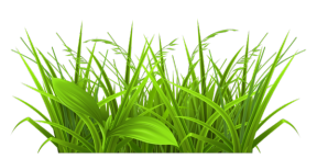 Free flower cliparts download. Weeds clipart picture library library