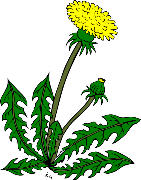 Free weeds cliparts download. Dandelion clipart vector vector library download