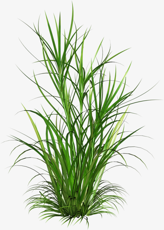 Pattern plant weed png. Weeds clipart jpg library