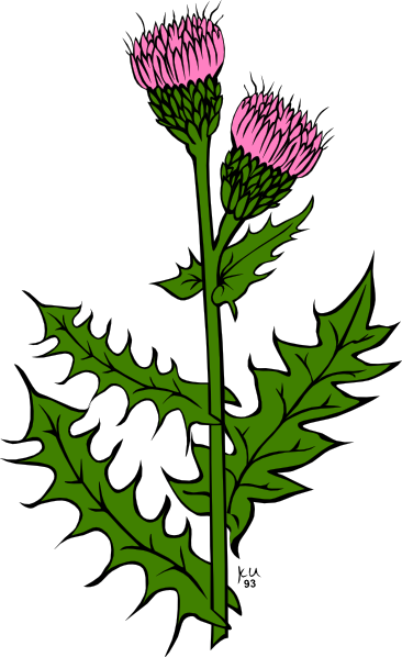 Weeds cartoon . Weed clipart graphic library stock