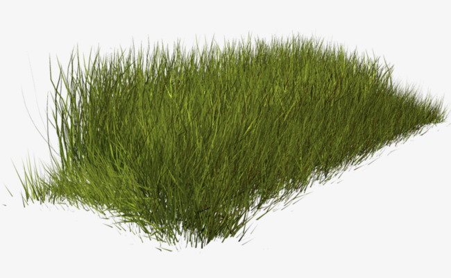 Weeds clipart weed plant. Grass green png image