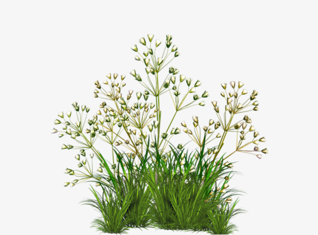 Weeds clipart weed plant. Green png image and
