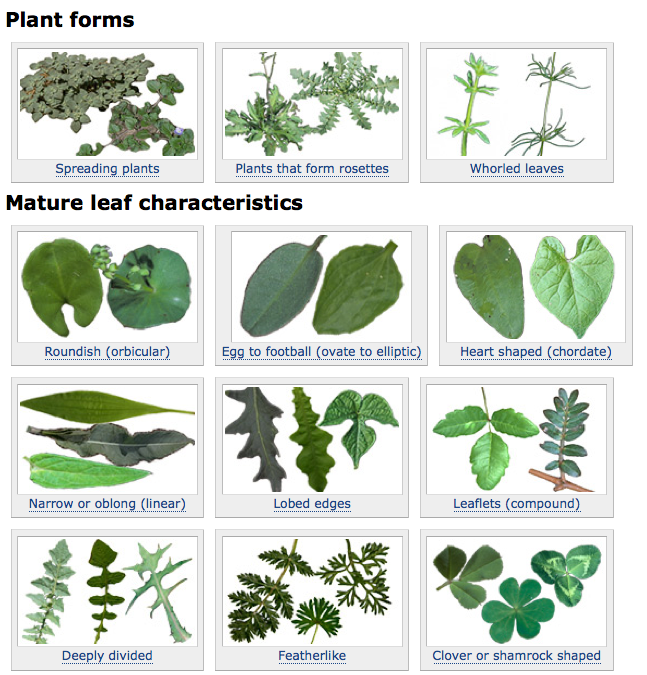 Weeds clipart weed plant. User friendly identification tool