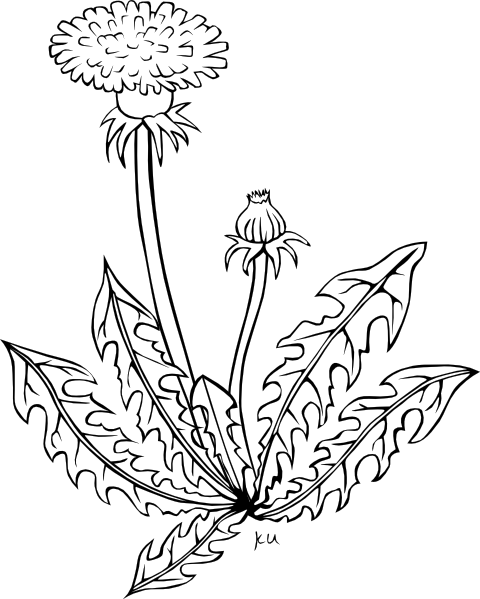 Weeds drawing. Collection of garden