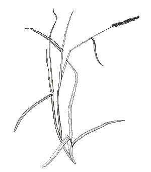 Weeds drawing grass. Glossary example diagram of
