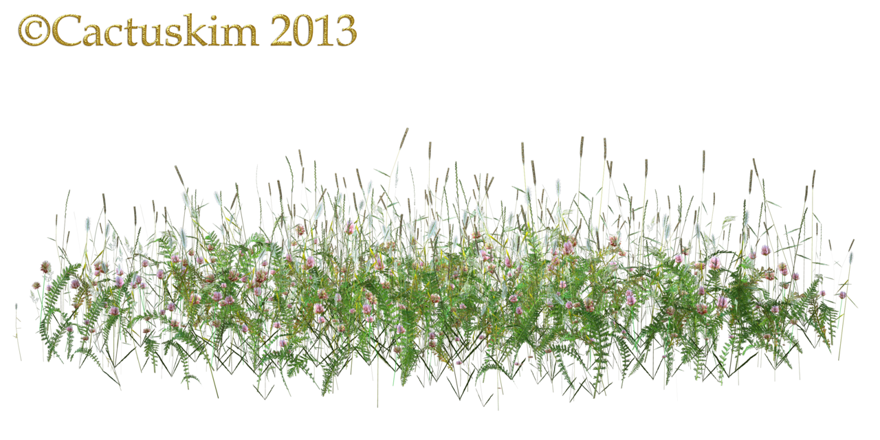 Weeds drawing grass. Wild flowers and png