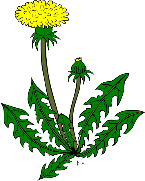 Weeds drawing nature. Weed plants flower free