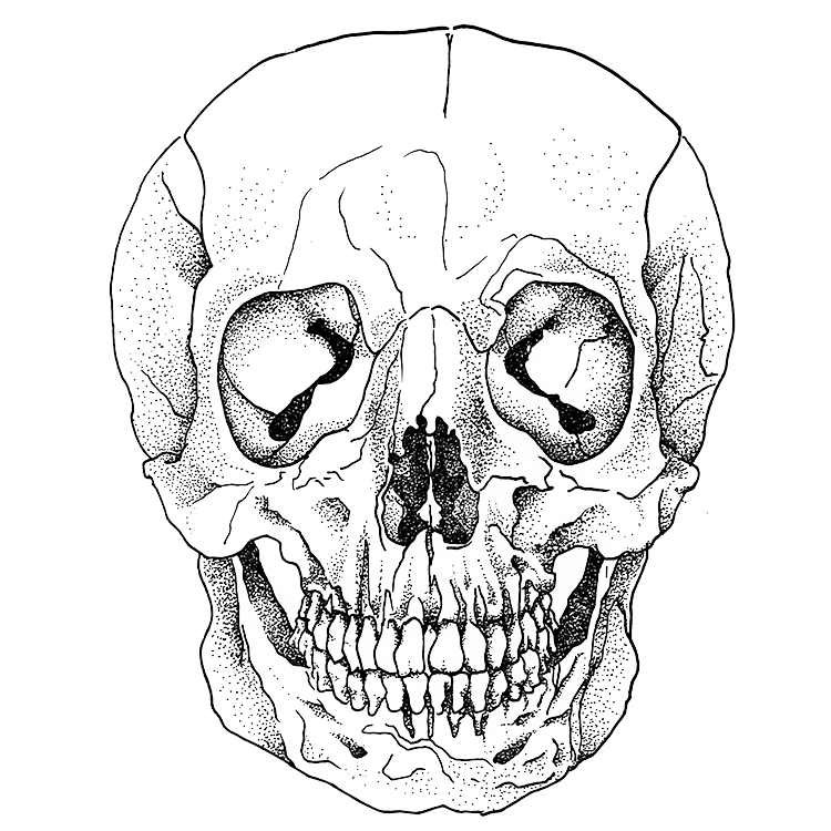 Weeds drawing skull. Archive gabeaux view