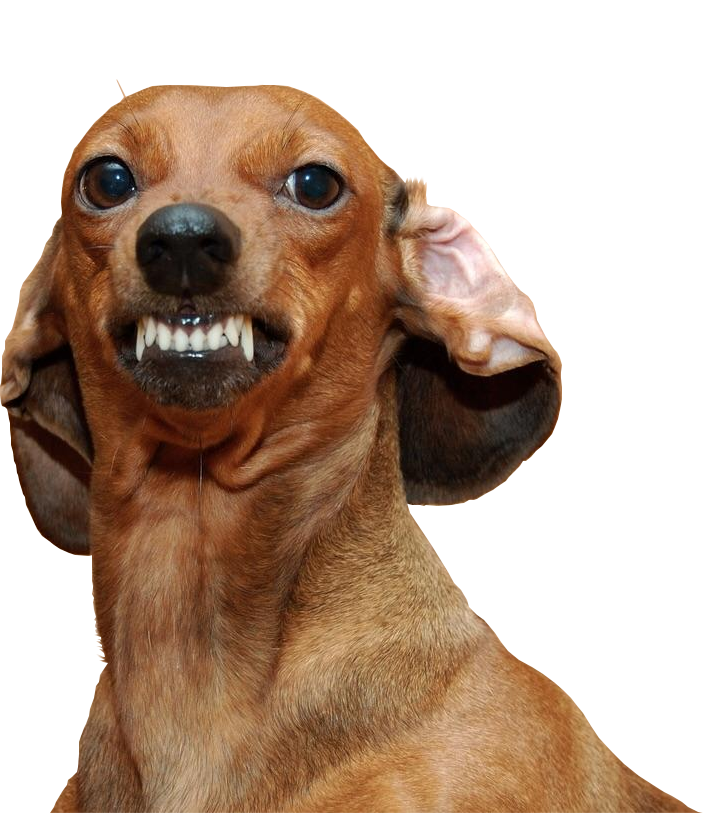 Weiner dog png. Psbattle a very angry