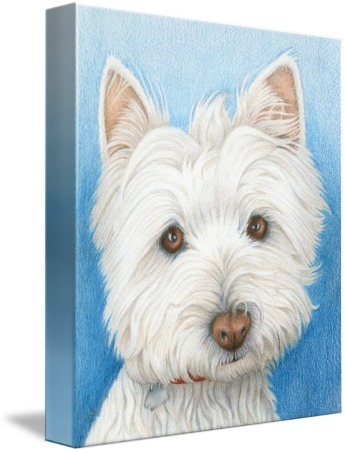 Westie drawing. Dog by ckeen art