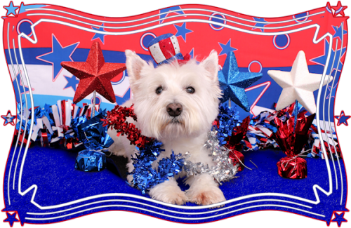 Westie drawing 4th july. Say woof petography june