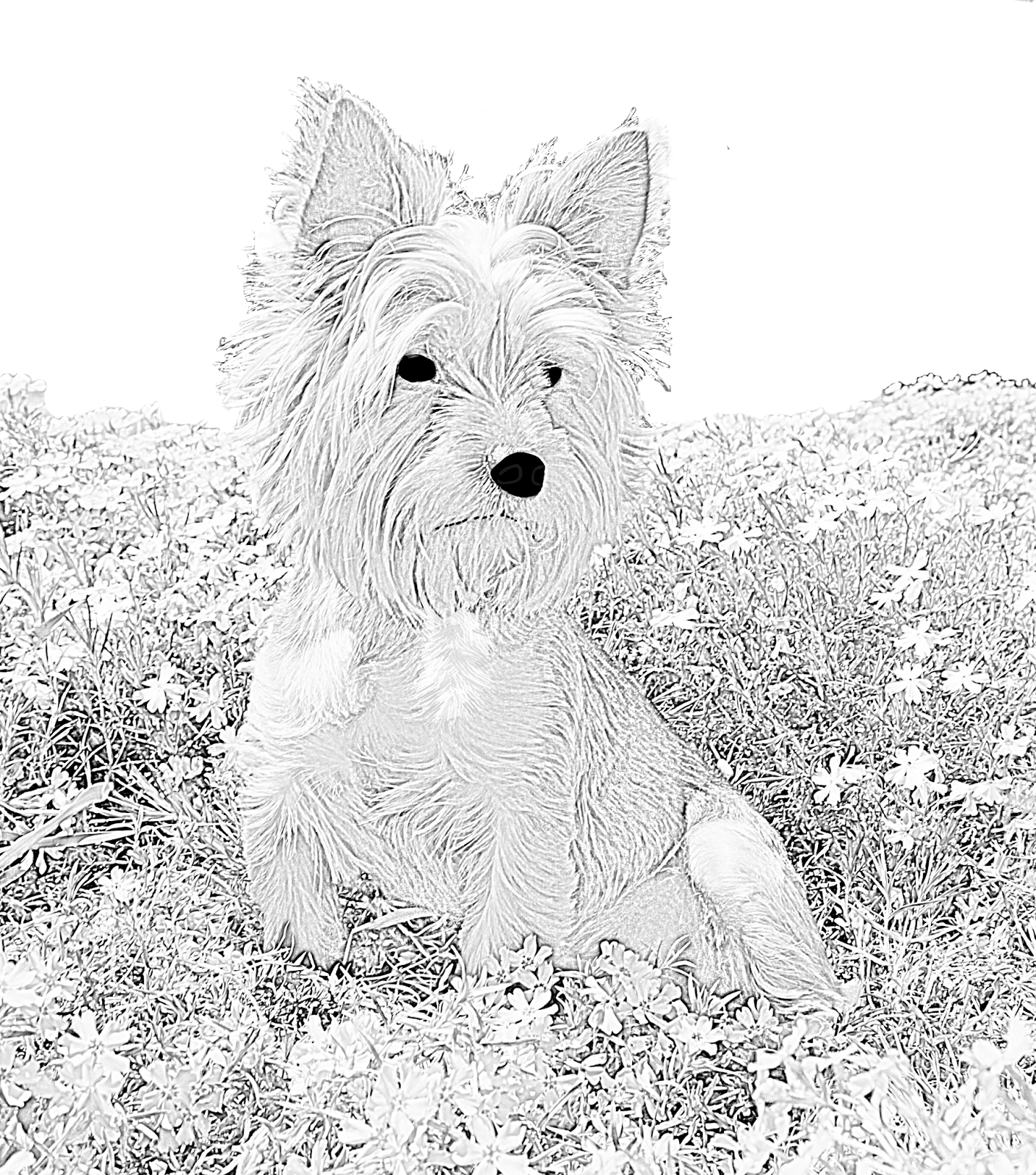 Westie drawing baby dog. Coloring for adults kleuren