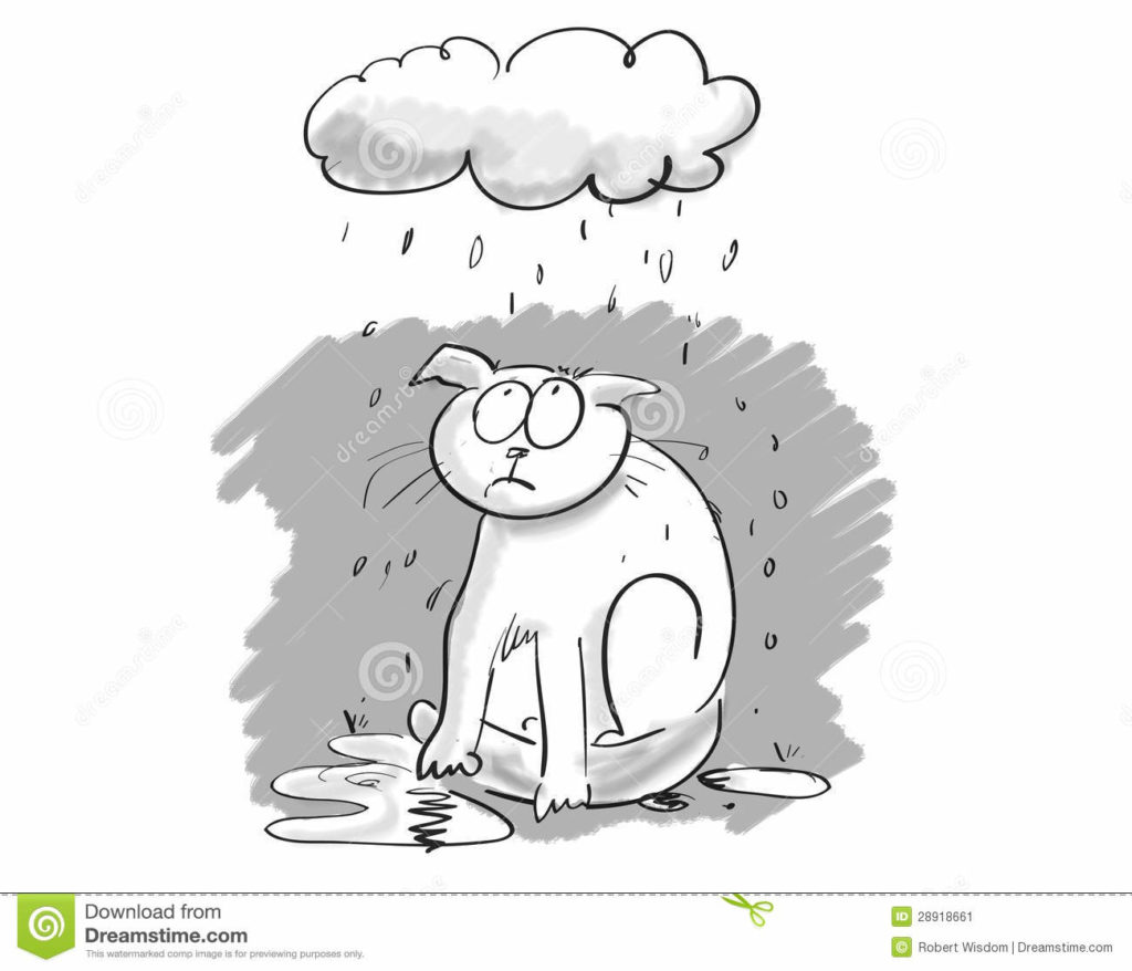 Wet clipart. Cartoon cat under gloomy