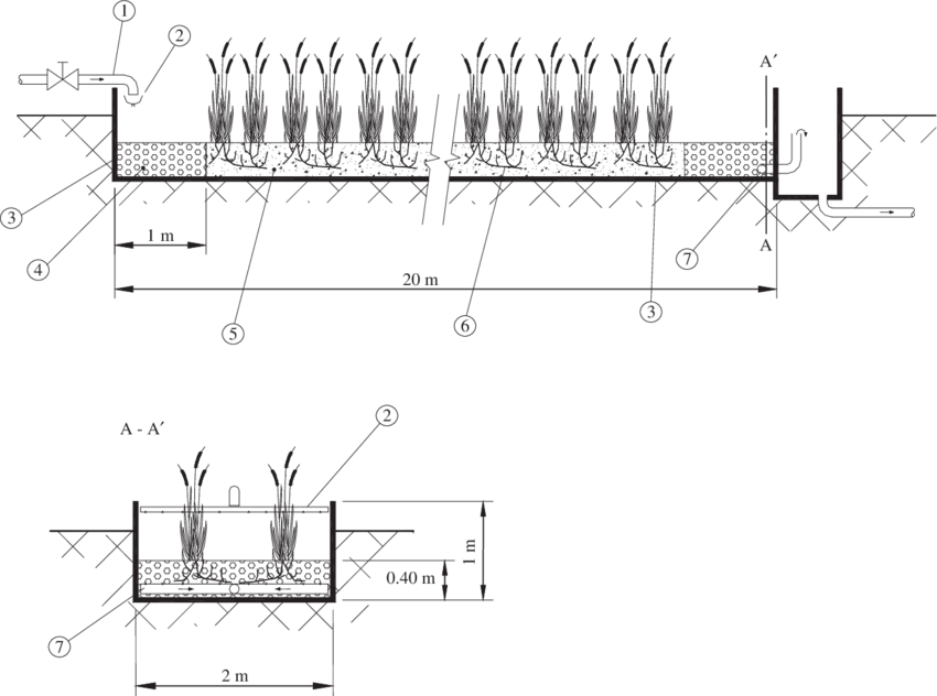 Wetland drawing. Schematic diagram of a
