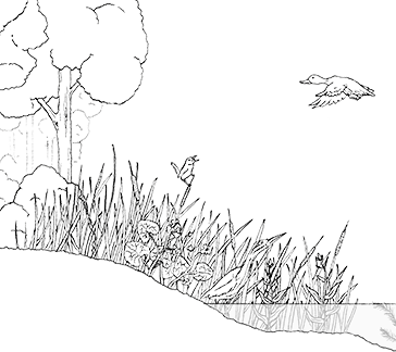 wetland drawing outline