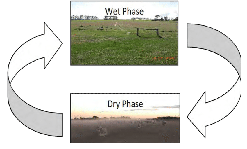 Wetlands drawing wet land. Cyclic changes in temporary