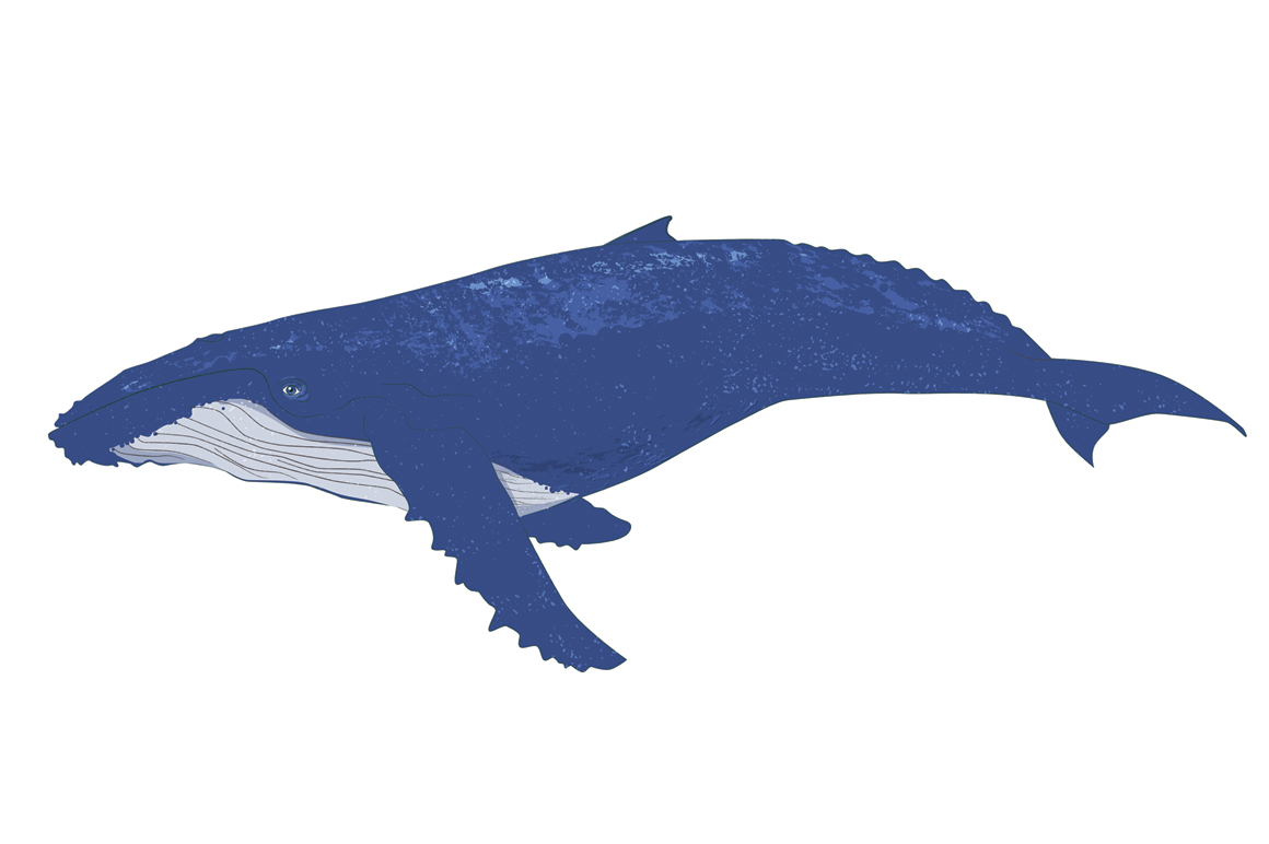 Whale clipart baleen whale. Humpback silhouette at getdrawings