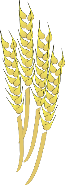 Vector wheat outline. Clip art at clker
