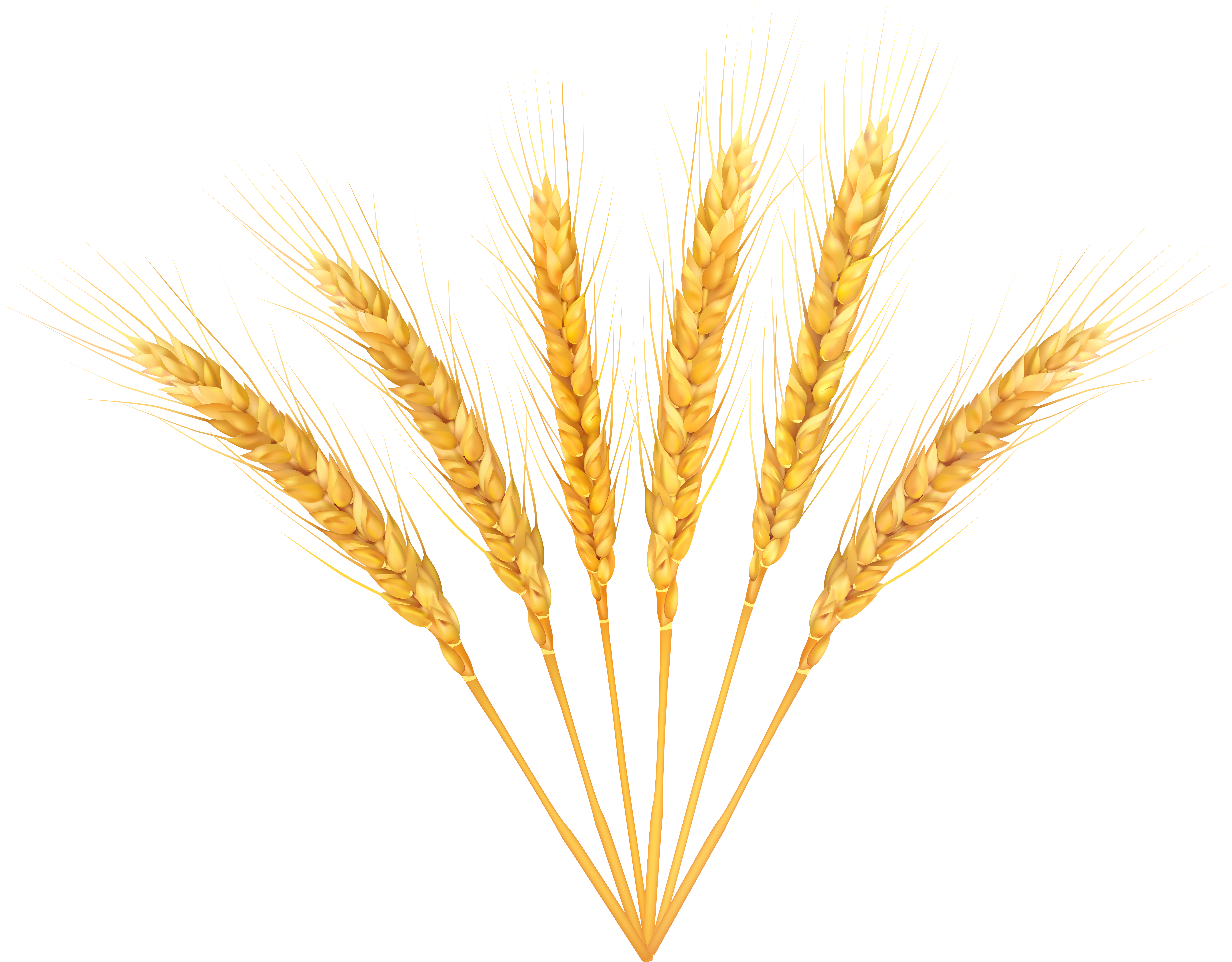 Wheat clipart clear background. Decoration png clip art