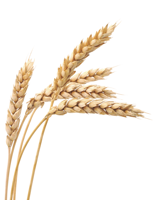 grain field png