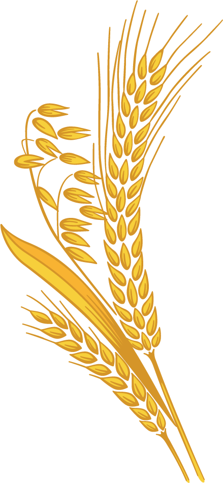 Grain png. Wheat images free download