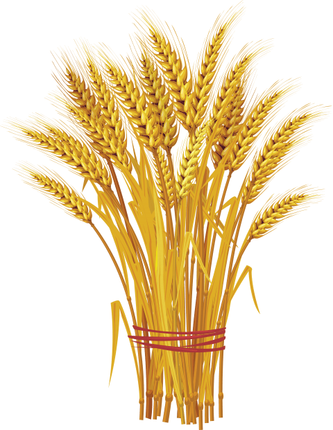 Wheat clipart wheat plant. Png free images toppng