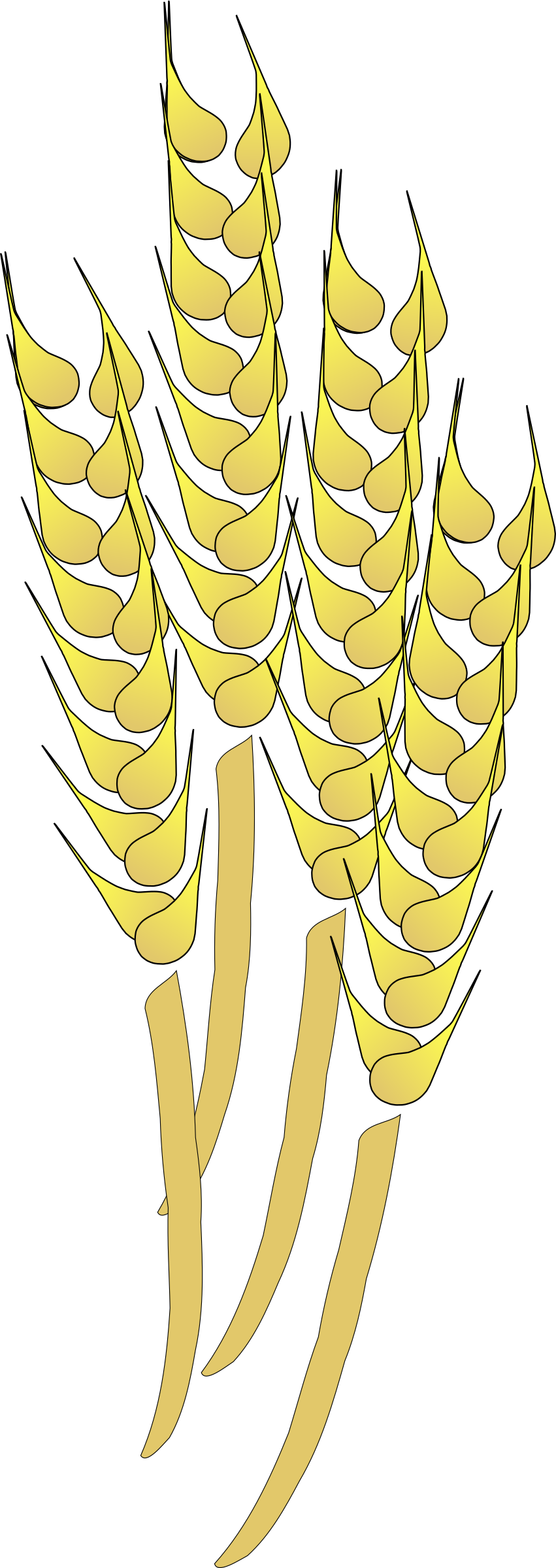 Wheat clipart wheat plant. Big image png