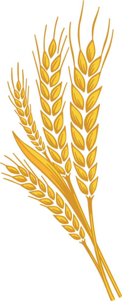 Wheat clipart wheat plant. Images hd png dlpng