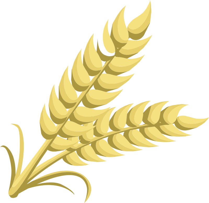 Wheat clipart wheat plant. Dividers free