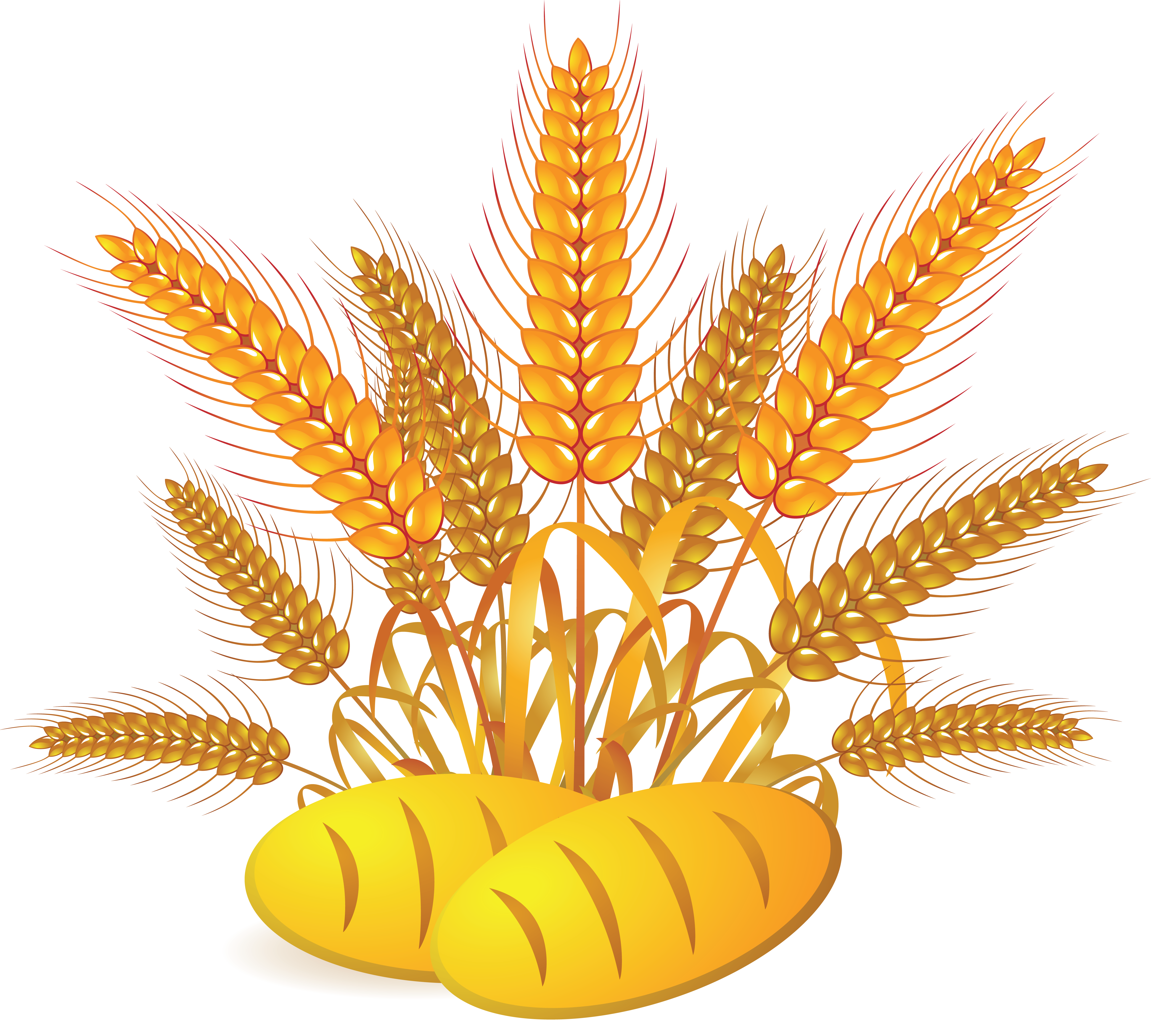 Wheat clipart wheat plant. Png images free download