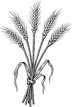 Wheat clipart wheat stem. Stalk from vintage vectors